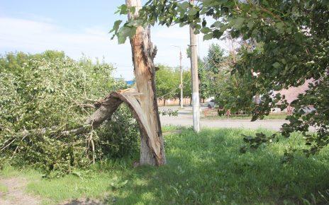 В Коркино сильный ветер повалил ветки деревьев