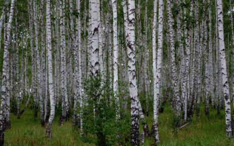 В Коркино женщина с детьми заблудилась в лесу