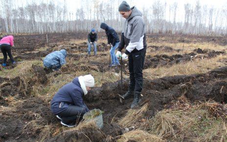 Вместо выгоревшего леса – молодые деревца. Спасибо коркинским полицейским!