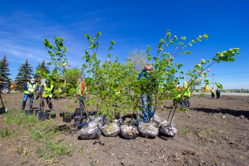 Сотрудники «Промрекультивации» высадили липы, вишни, яблони и рябины