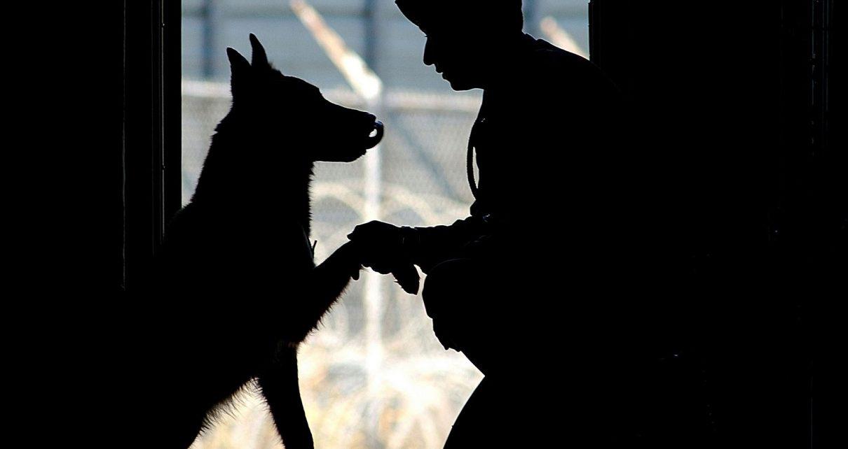 Коркинские пожарные спасли пса, провалившегося в глубокую яму