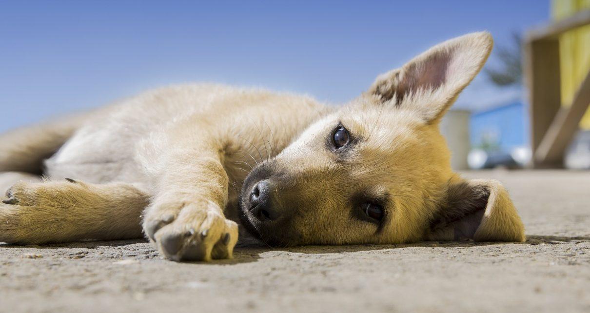 Приглашаем к разговору о бродячих собаках!